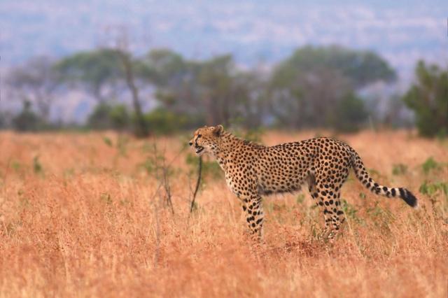 Sprachreisen-Suedafrika